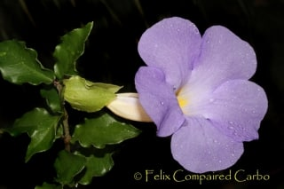 Fleur03