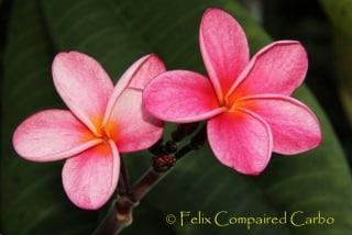 Fleur08